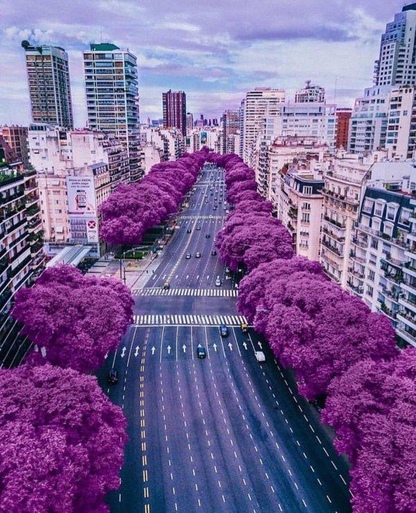 Purple, Metropolitan area, Violet, Blue, Lavender,