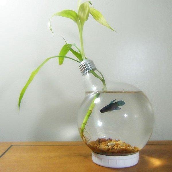 Large Light Bulb Beta Fish Aquarium