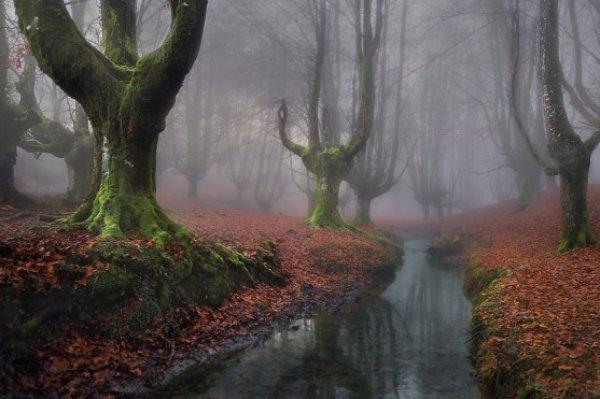 Otzarreta Forest – Spain