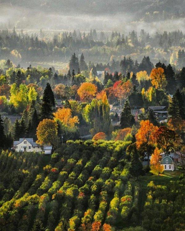 nature, leaf, autumn, tree, morning,
