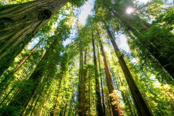 Hug a Tree at Redwood National Park