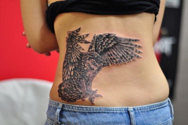 Really Cool Owl