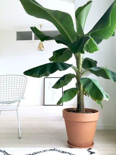 plant, leaf, flowerpot, houseplant, plant stem,