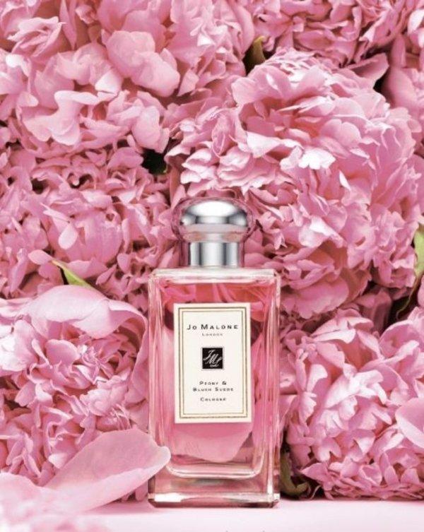 pink,perfume,flower,plant,petal,