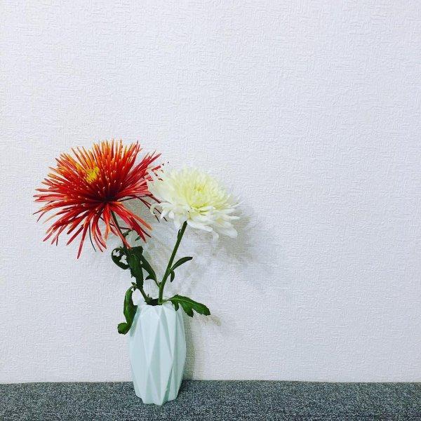 flower, cut flowers, flowering plant, vase, flower arranging,