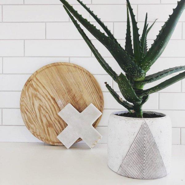 plant, flowerpot, aloe, vase,