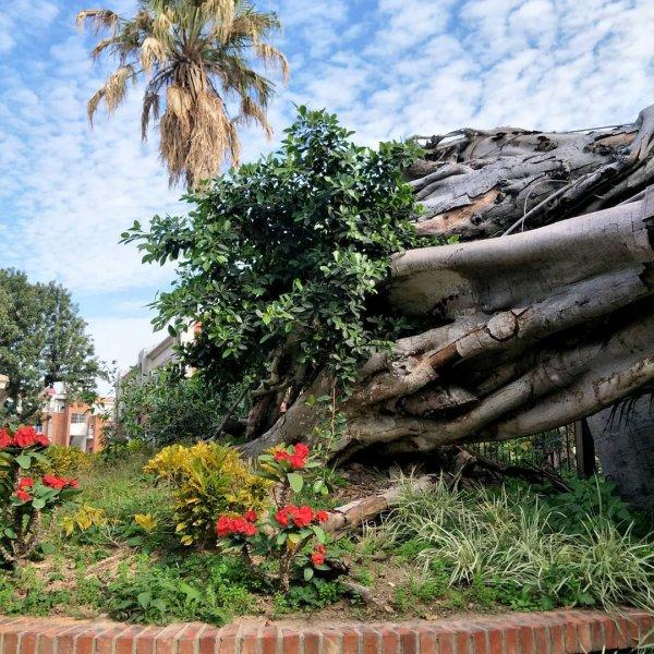 tree, vegetation, plant, flora, landscape,