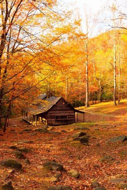 nature, autumn, leaf, deciduous, path,