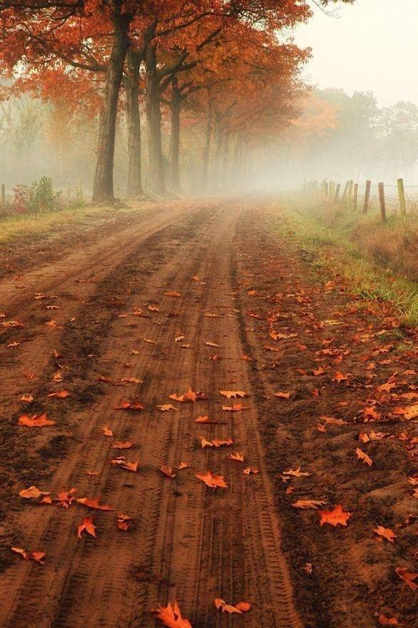 The Old Dirt Road in Belgium