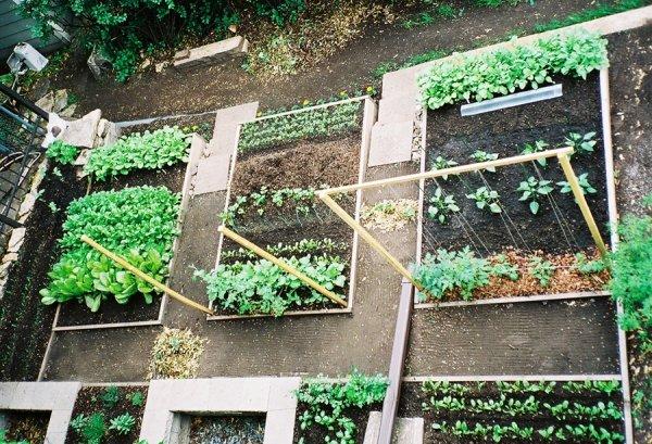 Planting a Kitchen Garden