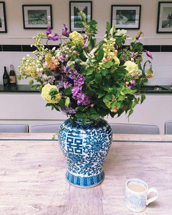 color, flower, plant, hydrangeaceae, lavender,