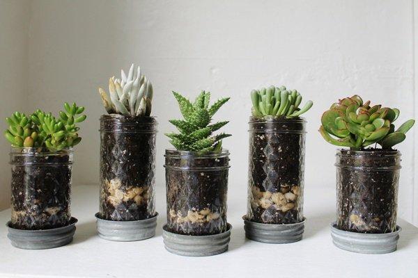 plant,land plant,flower,flowering plant,flowerpot,