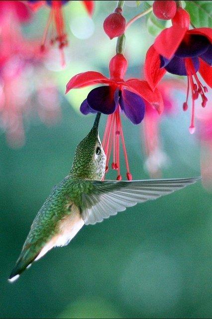 Listen to the Birds Sing