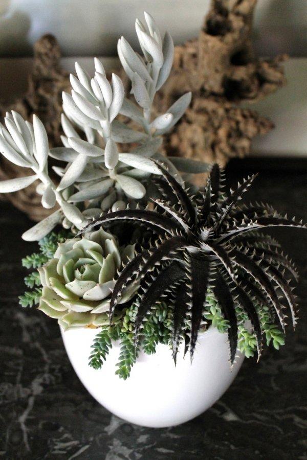flower arranging,flower,flora,plant,floristry,