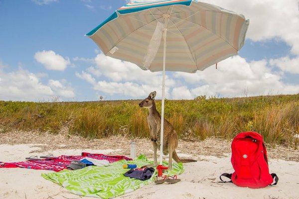 umbrella, windsports, wind, kite sports,