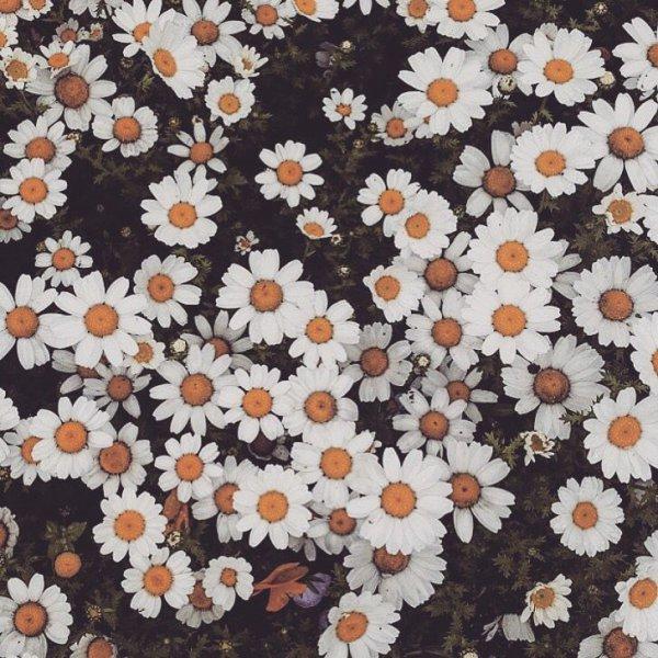flower, textile, pattern, design, material,