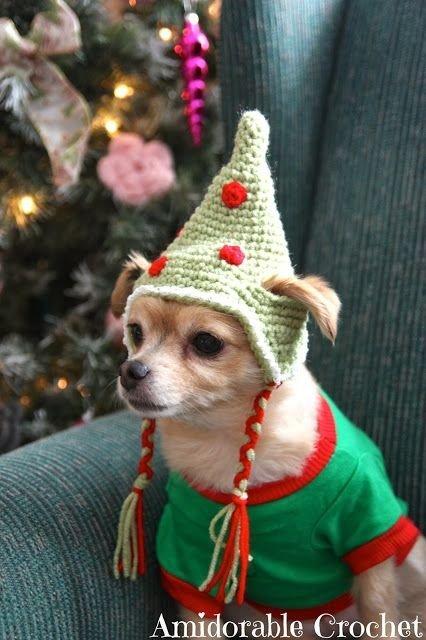 DOG in HAT