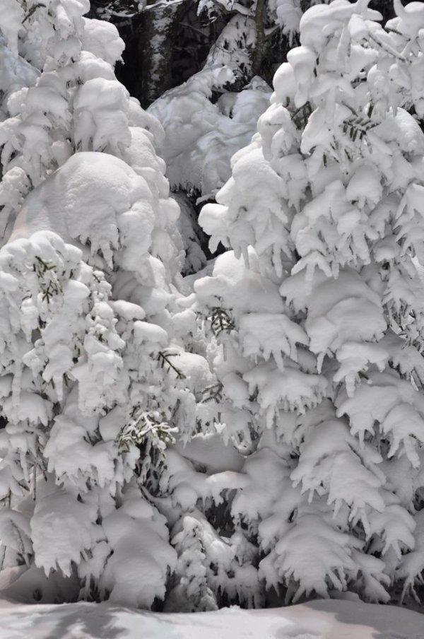 Hidden Trees