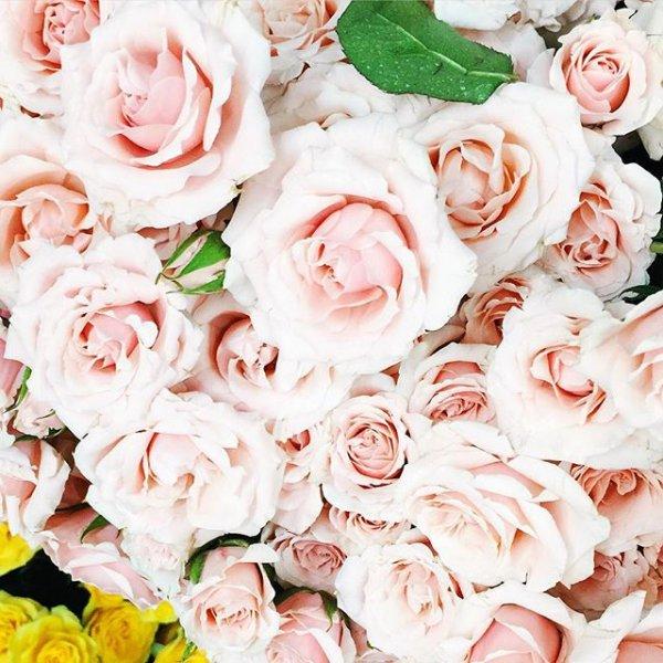 flower, pink, garden roses, flower bouquet, plant,