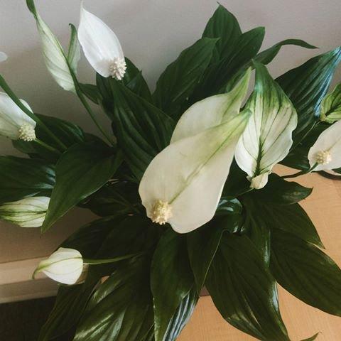 flower, plant, flora, flower arranging, lily,