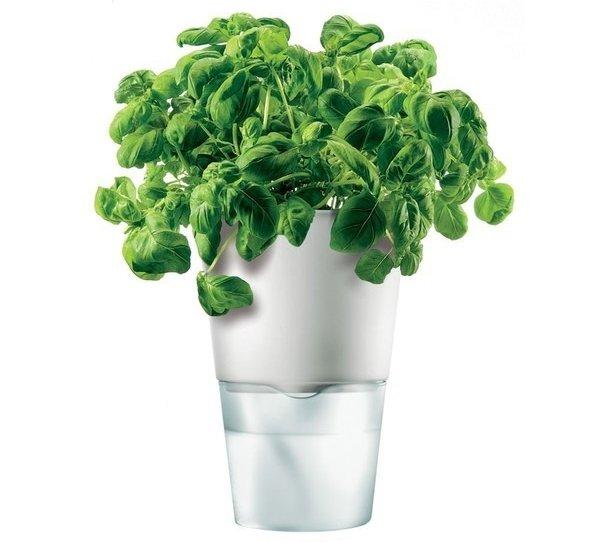 Herb Pot, Self-Watering, Chalk White