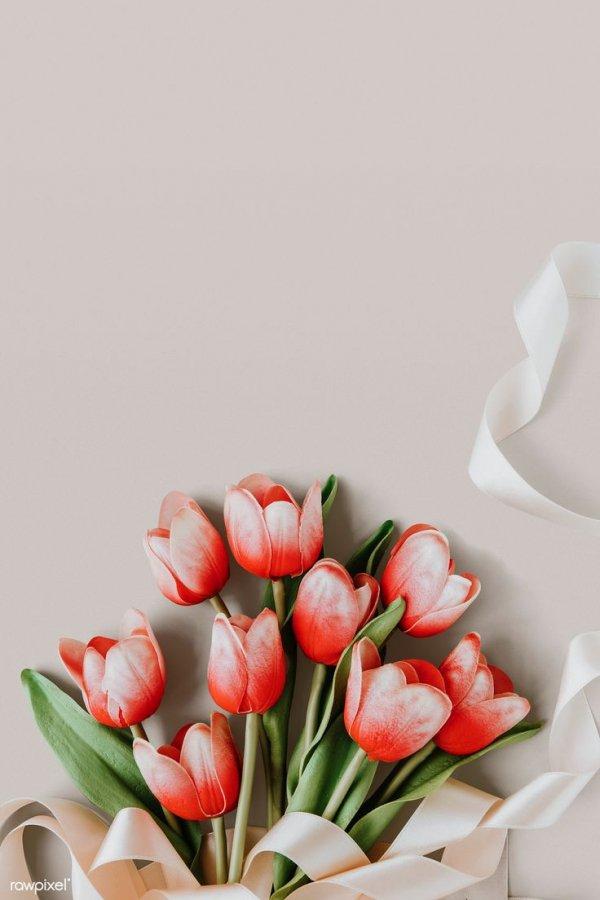 Flower, Tulip, Cut flowers, Plant, Pink,