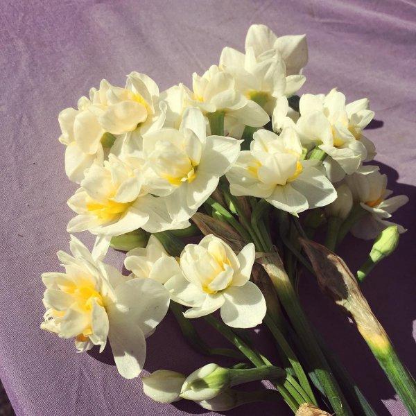 flower, flowering plant, plant, narcissus, cut flowers,