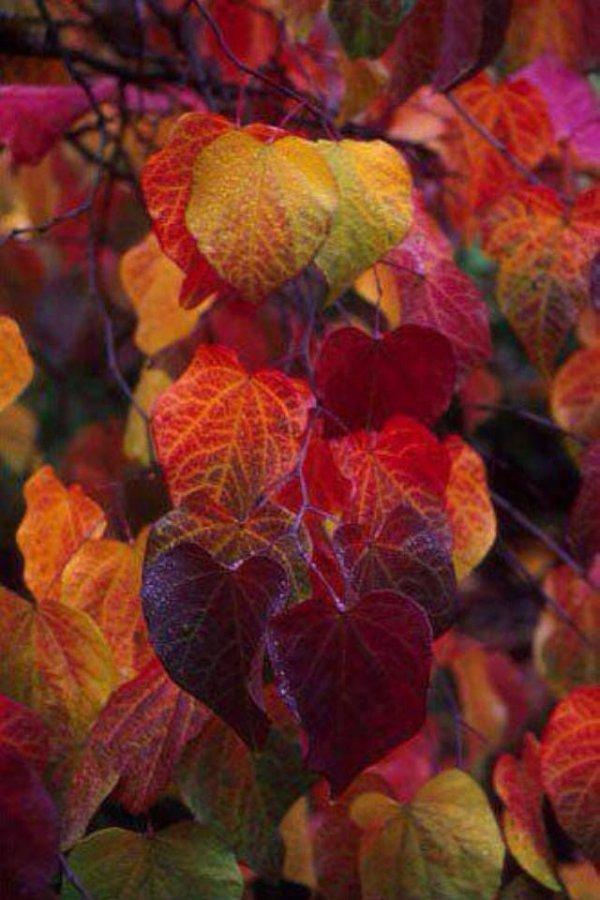 leaf, autumn, flora, petal, plant,