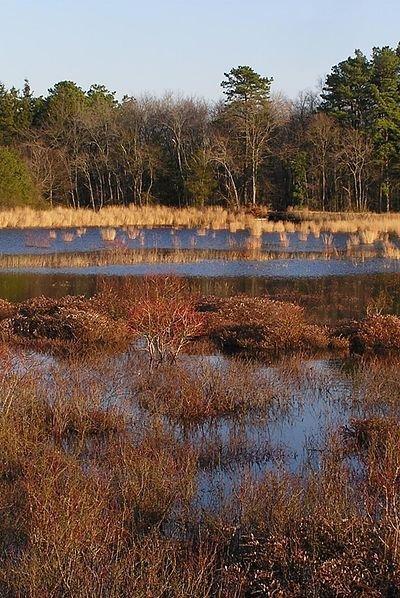 New Jersey – New Jersey Pinelands National Park
