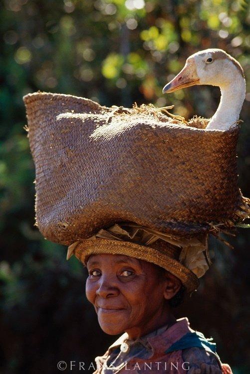 Woman Taking Goose to Market