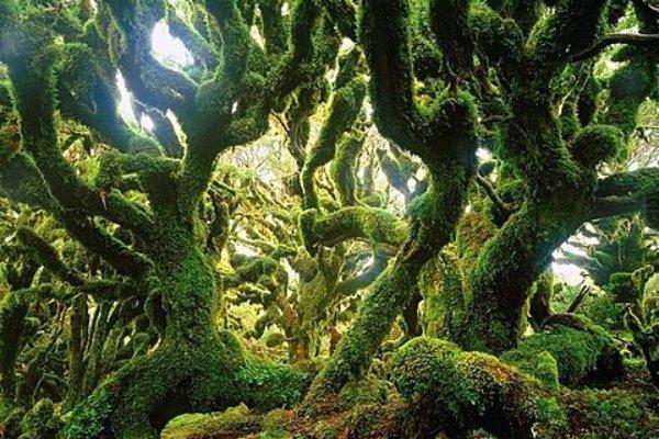 Goblin Forest – New Zealand