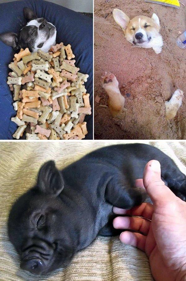 dog,mammal,vertebrate,puppy,dog like mammal,