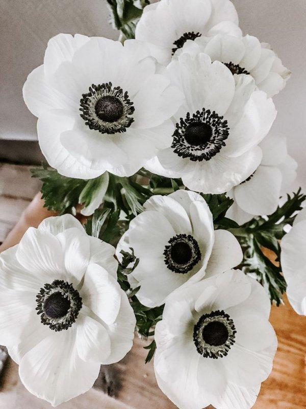 Flower, White, Petal, Plant, Cut flowers,