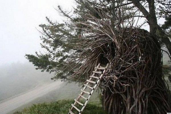 Sleep in the Human Nest in Big Sur, California