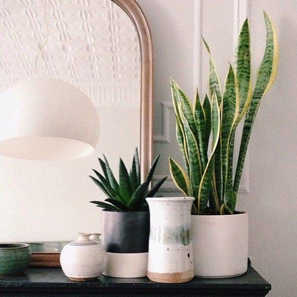 plant, lighting, floristry, vase, interior design,