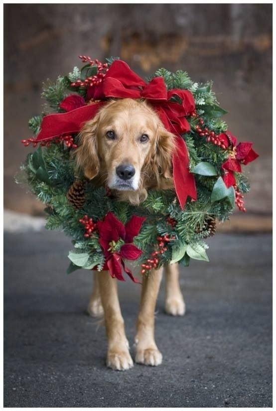 Doggy Wreath