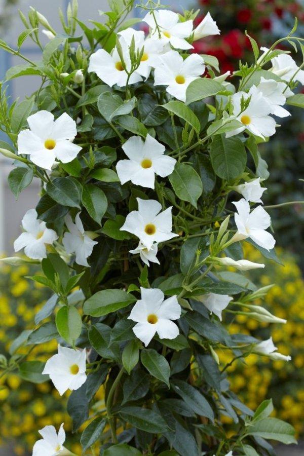 plant, flower, flora, flowering plant, annual plant,