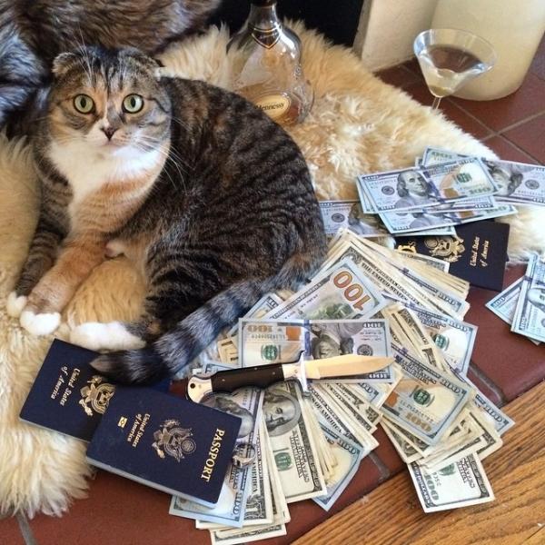 cat,cash,small to medium sized cats,kitten,PASSPORT,