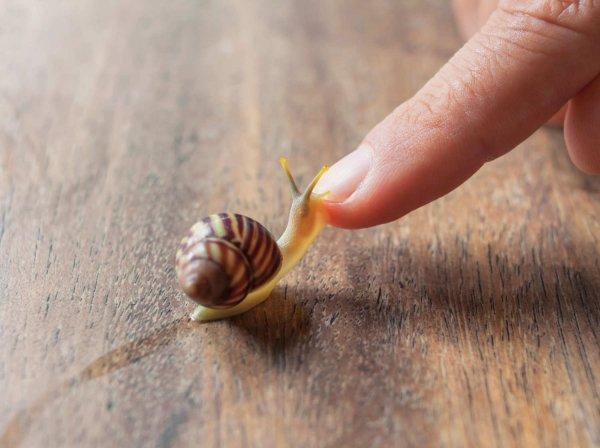 Snail Mucus
