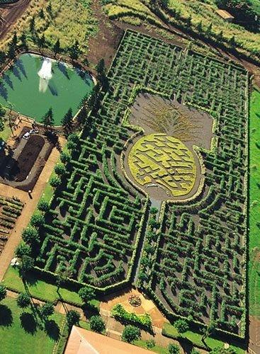 The Pineapple Garden Maze