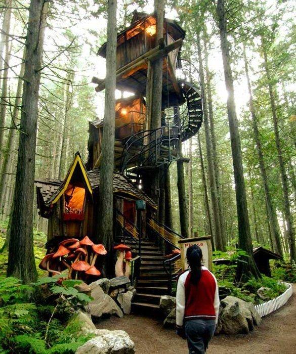 habitat,tree,forest,jungle,tree house,