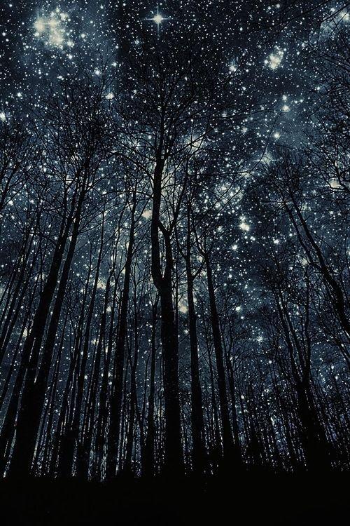 tree,night,weather,atmosphere,darkness,
