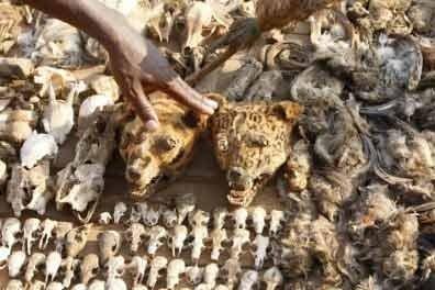 Most Morbid Market – Akodessewa Fetish Market (Lome, Togo)