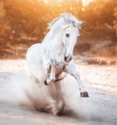 horse, horse like mammal, mane, stallion, mustang horse,