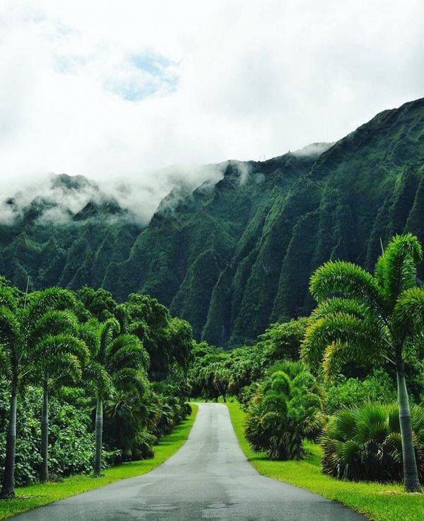road, vegetation, green, nature, mountainous landforms,