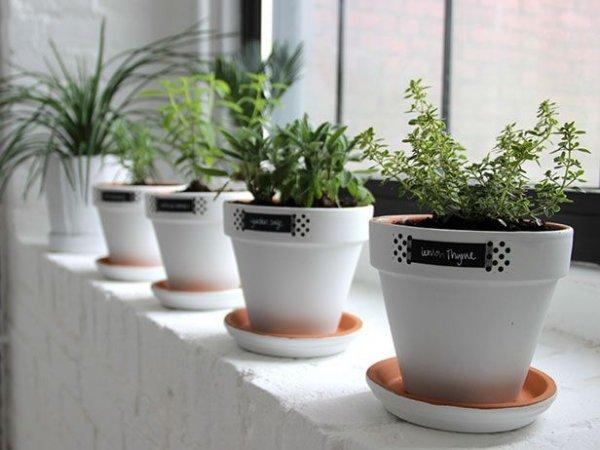 plant,ceramic,flowerpot,design,flower,