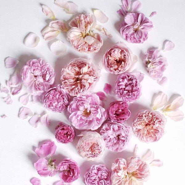 color, flower, plant, lilac, blossom,