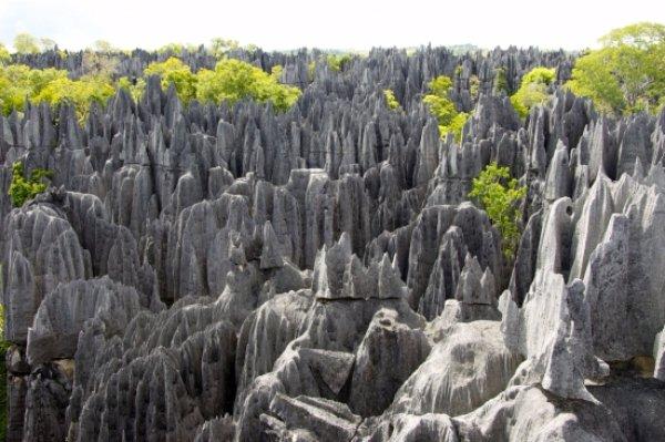 Tsingy Forest – Madagascar