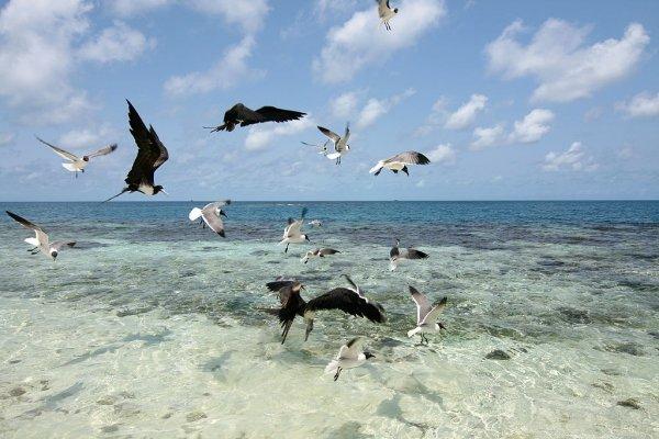 Sabal Beach, Belize