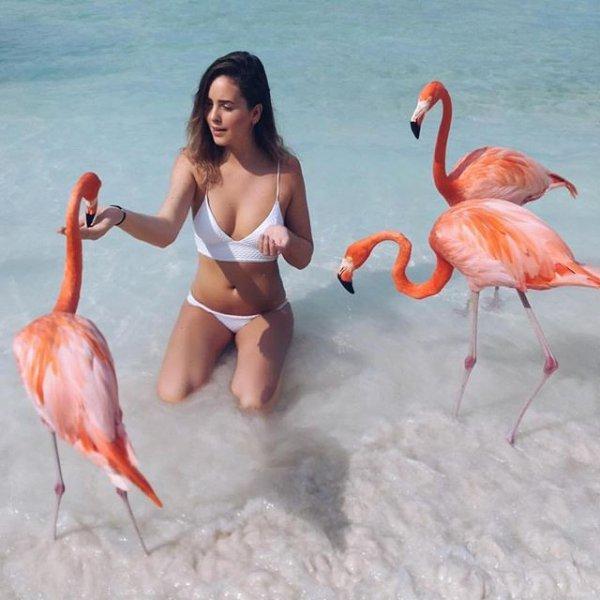 flamingo, bird, vertebrate, beak, water bird,
